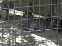 2011 Cat Haven_11