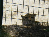 2011 SAL Cat Haven