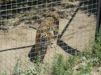 2011 Cat Haven_18