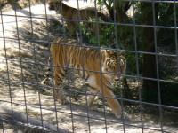 2011 Cat Haven_1