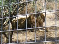 2011 Cat Haven_36
