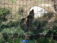 2011 Cat Haven_37