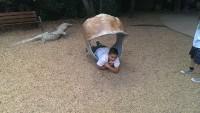 Zoo 2013_15