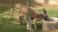 Zoo 2013_16
