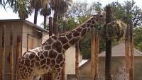 Zoo 2013_1