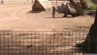 Zoo 2013_20