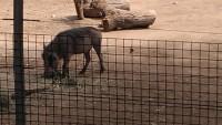Zoo 2013_21