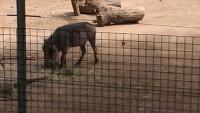Zoo 2013_23