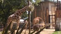 Zoo 2013_24