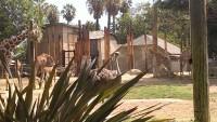 Zoo 2013_27