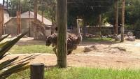 Zoo 2013_29
