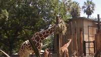Zoo 2013_30