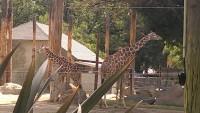 Zoo 2013_31