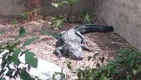 Zoo 2013_41