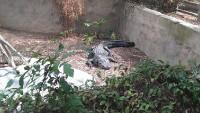 Zoo 2013_42