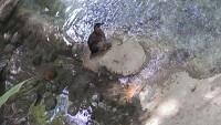 Zoo 2013_45