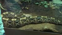 Zoo 2013_5