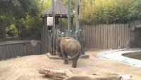 Zoo 2013_7