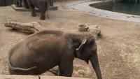 Zoo 2013_8